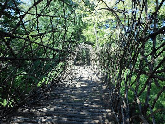Arte in natura: ponte vegetale  di FENICIO58