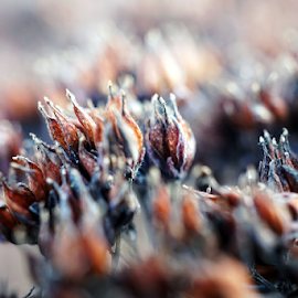 Dried flowers  by Todd Reynolds - Abstract Macro