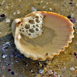Shell we see by Ciprian Apetrei - Nature Up Close Other Natural Objects ( shell, nature up close, ocean, brittany, close up )