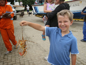 Photo: The boy without fear! This lobster is alive!