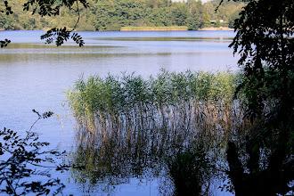 Photo: Schilf an der Ostseite des Großensees