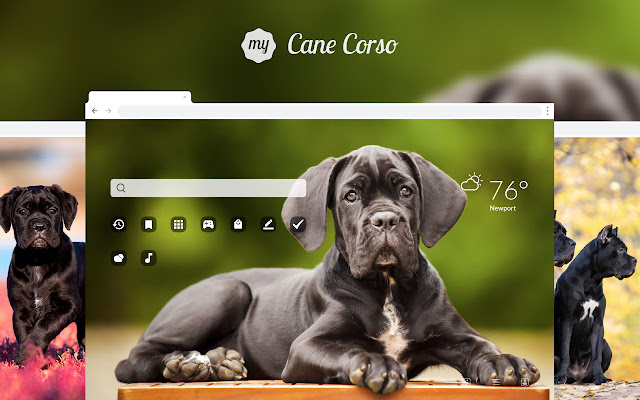 My Cane Corso Cute Dog & Puppy HD Wallpapers