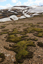 Photo: Despite the forbidding landscape, there was plenty of green moss and lichen growing