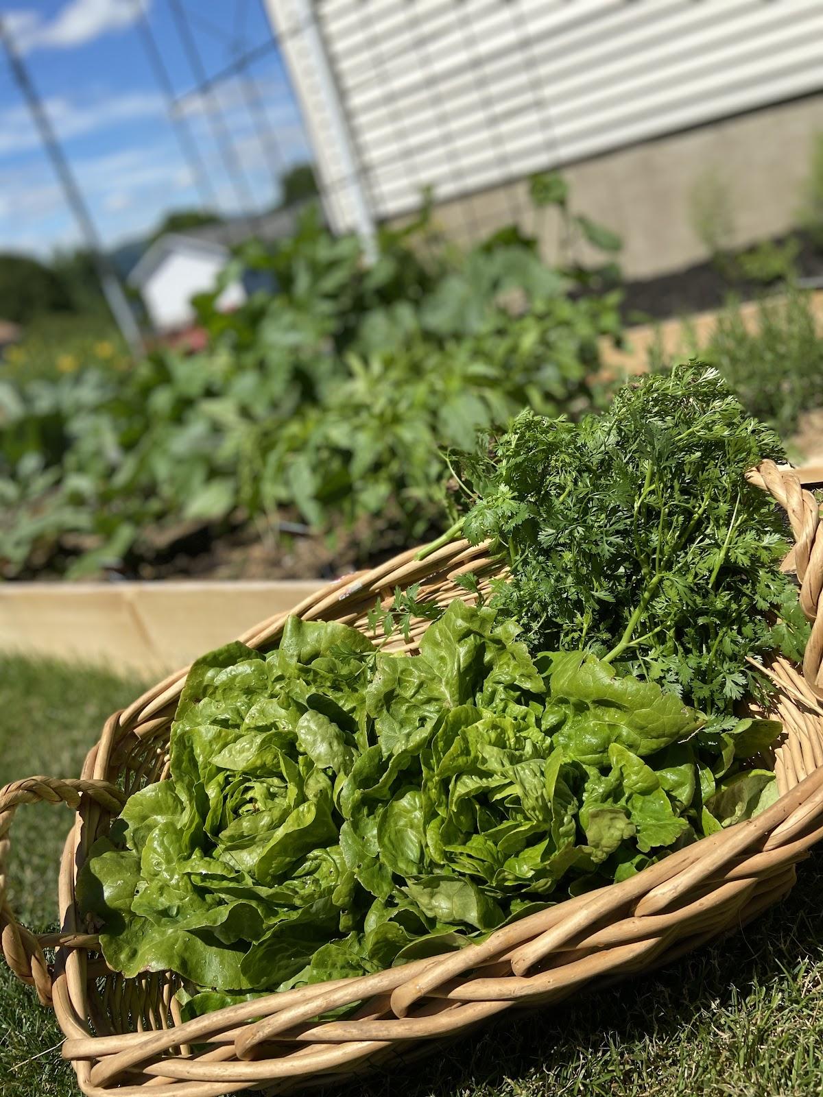Camaryn's herbs
