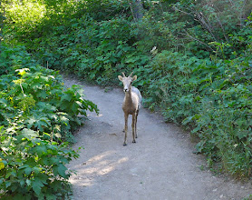 Photo: First Canadian we encountered on the Bear's Hump Trail Friday evening