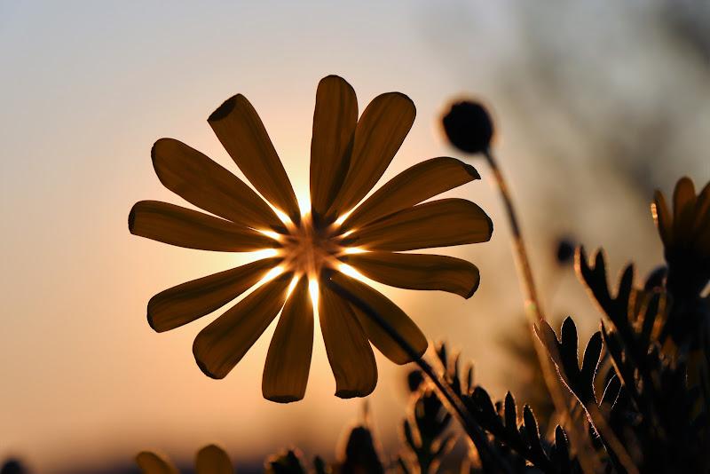 ohh Sole mio sta in fronte a me... (al fiore)  di Cimabue