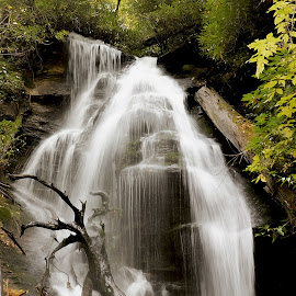 Water Source by Mary Zugelder - Landscapes Forests ( forest, carolina, fall, waterfall, hiking, source,  )