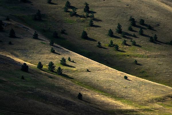 Trees di Maurizio Marcaccio