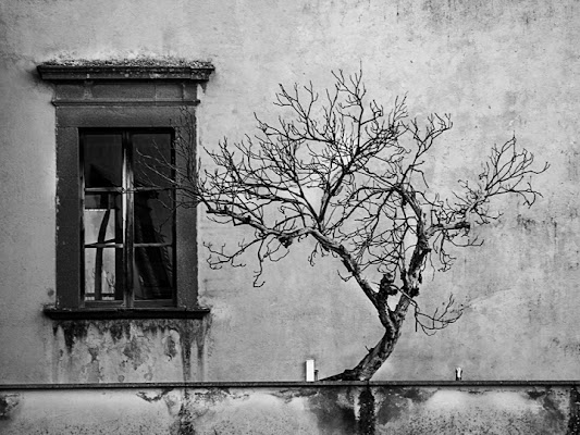 Tree in Orvieto di thepoisonapple