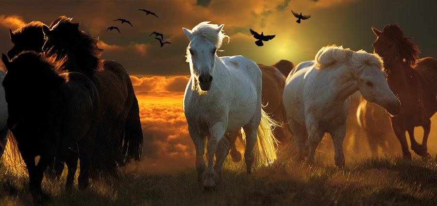 running by Haris Fallin - Animals Horses ( sky, unique, horses, dust, land, pwc storm, storms, run, birds, kuda )