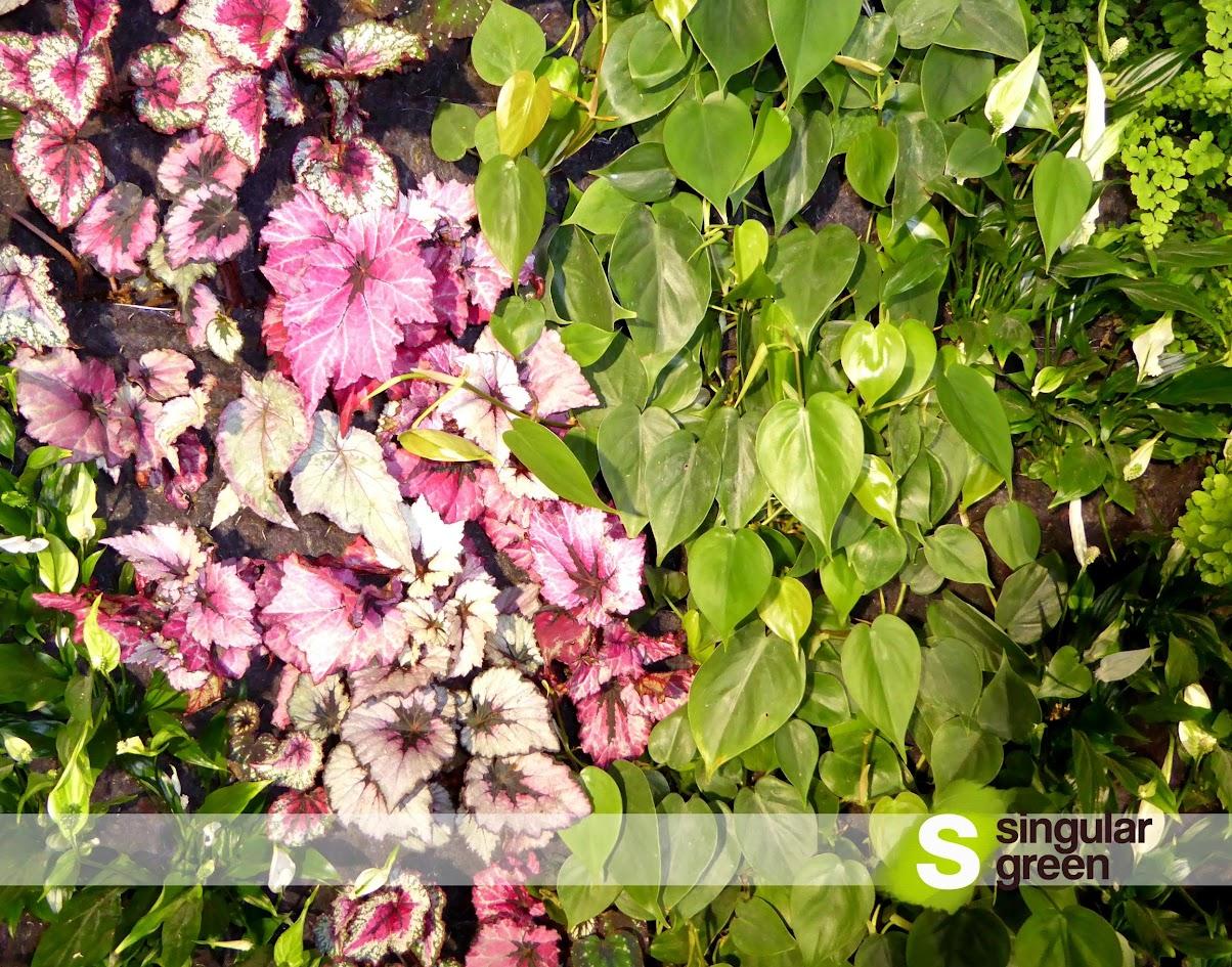 Jardín Vertical en Mallorca  - Detalle de plantas