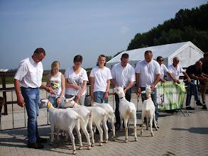 Photo: Klasse 2: witte lammeren geboren in januari 2013.  1a. Nooro's Femke 43; 1b. Nooro's Roza 16; 1c. Nooro's Femke 44; 1d. Nooro's Femke 42; 1e. Fay van de Dijk; 1f. Zus van 't Mudehof.