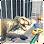 Dinosaur Simulator - City destroy
