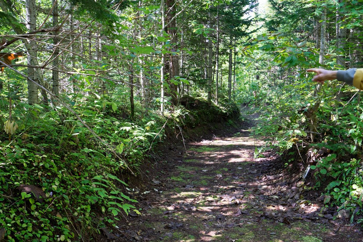 「歩きやすい道を作るのに、何年もかかって手作業で行います」と武市さん