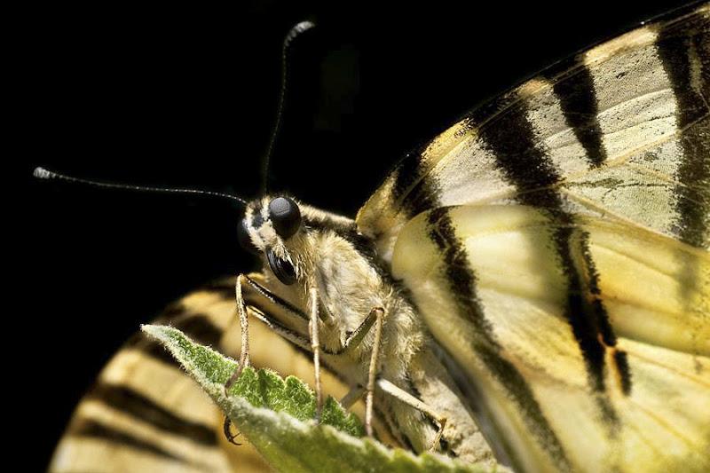 La farfalla spiegò le ali al vento , ma non le capì di Utopia