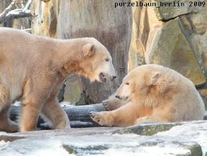 Photo: Gianna macht es sich bequem - Knut will lieber spielen ;-)