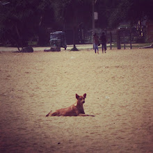 Photo: New puppy friend. (Negombo)