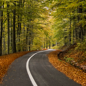 The road by Comsa Bogdan - Transportation Roads ( orange, autumn leaves, street, beautiful, image, canvas, forest, enjoy, travel, road, transportation, landscape, photo, photography, amazing, frame, autumn, gorgeous, beautifull, comsa bogdan, trees, view, autumn colors, romania prin obiectiv, wonderful )
