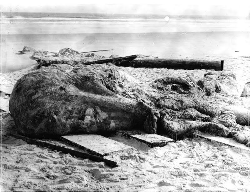 Globsters: quando monstros marinhos encalham nas praias