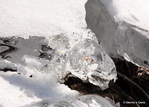 Photo: Ice turtle