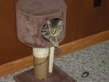 CAT LOVERS CORNER!