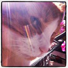 Photo: Enjoying the sun in the balcony #intercer #cat #pet #cats #pets #meow #petsofinstagram #beautiful #cute #cutie #animal #sweet #kitty #kitten #catlovers #portrait #pretty #paws #ears #fur #catsofinstagram #eyes #sun #light - via Instagram, http://instagr.am/p/PPfpEbJfnN/