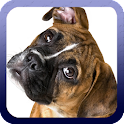Boxer Dog Wallpaper icon