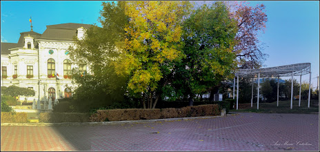 Photo: Fraxinus excelsior 'Aurea' - - din Piata 1 Decembrie 1918, parcul statuii Dr. Ioan Ratiu - 2018.09.30