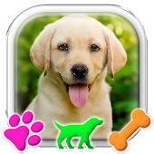 Labrador Retriever Puppy Launcher