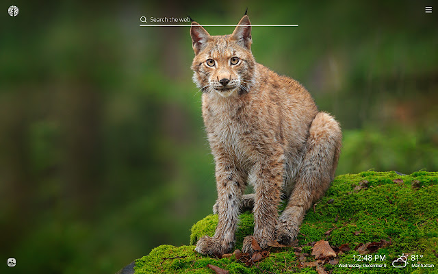 Lynx HD Wallpapers New Tab