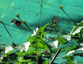 Photo: Näimme ihan kiitettävästi perhosia (ja toukkia ja koteloita)