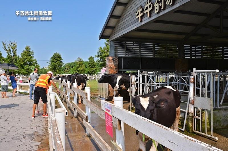 千巧谷牛樂園牧場牛牛的家
