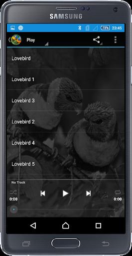 Kicau Master Lovebird