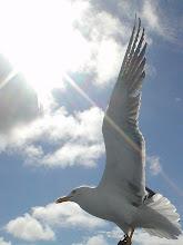 Photo: Чайка