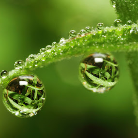 Dews by Karthi Keyan - Abstract Water Drops & Splashes ( macro, grass, dew, drops, refraction )