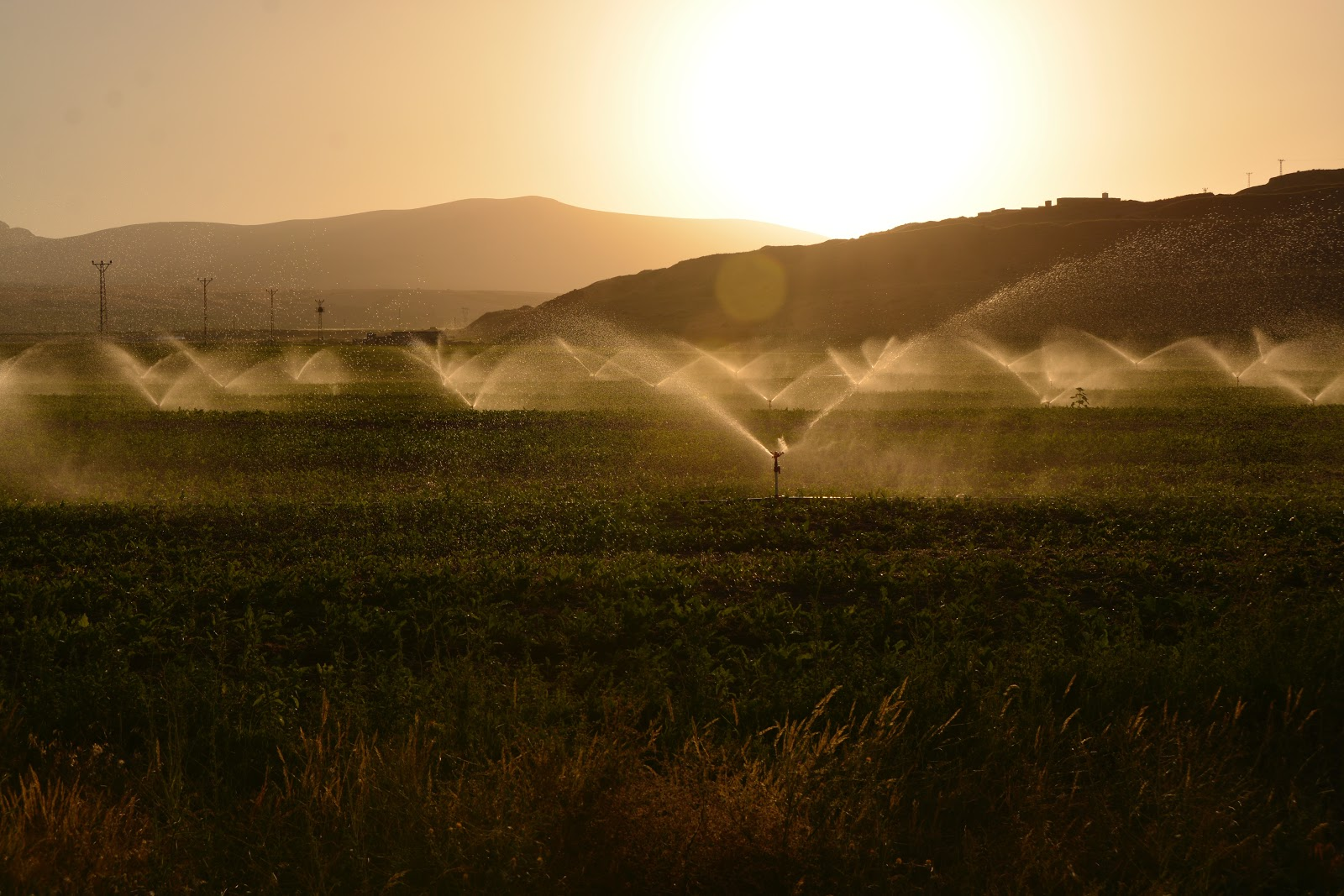 Irrigação é o ato de regar a plantação com água. (Fonte: Pexels)