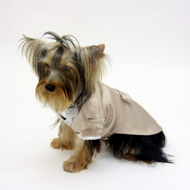 [Valentine PROMO] Jaiden Dog Tuxedo