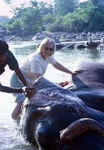 Photo: Aline washing Tara the famous elephant at Kipling Camp at Kanha in 2002