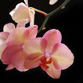 Flowers (138).jpg