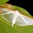 Cranbid moth