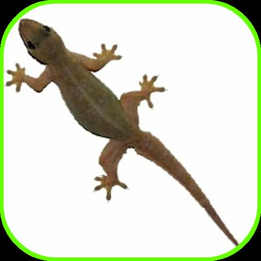 Lizard Fall - Apps on Google Play