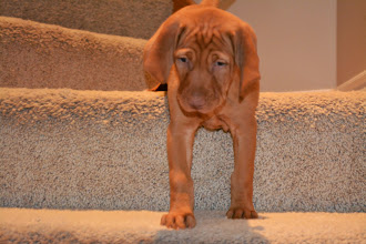 Photo: Going DOWN the stairs