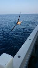 Photo: ツバメがちょいちょい飛んでいたので 携帯のカメラで「激写!」 ・・・連射機能が付いているので 瞬間の写真もバッチリ!