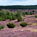 Lüneburger-Heide Land icon