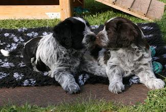 Photo: aber die Schwestern können auch ganz einträchtig zusammen liegen