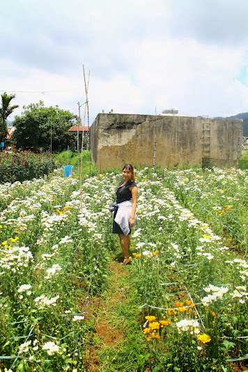 what to do in Baguio city activities destinations rose farm barangay bahong