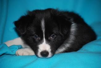 Photo: 6,5 weeks old