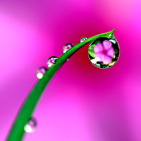 by Niin Peweel - Nature Up Close Flowers - 2011-2013 ( nature up close, flowers )