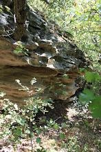 Photo: СО временем известняк и корни деревьев стали единым целым.