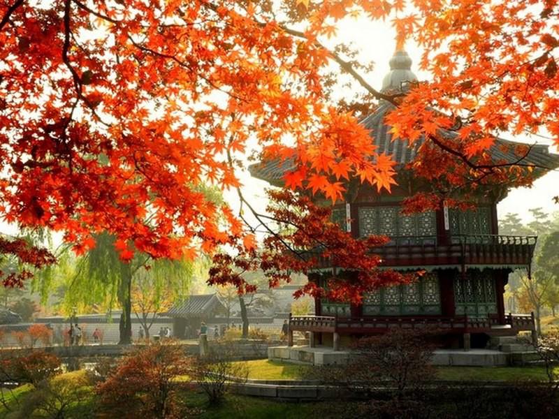 Южная Корея в мире, медицина